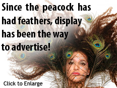Since the peacock has had feathers display has been the way to advertise